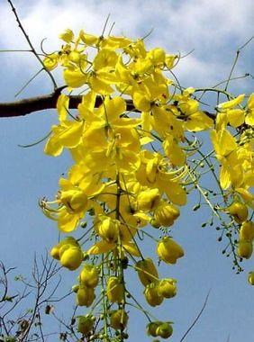 ดอกไม้ประจำจังหวัดนครศรีธรรมราช
